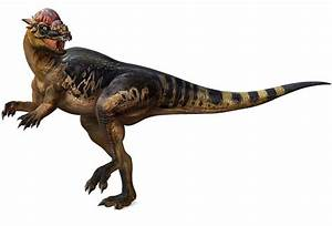 Pachycephalosaurus Pictures & Facts - The Dinosaur Database