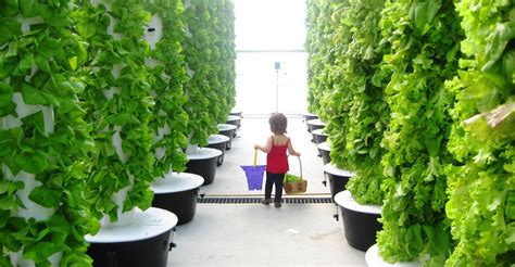 tower garden for local tower garden farmer produces aeroponic food for