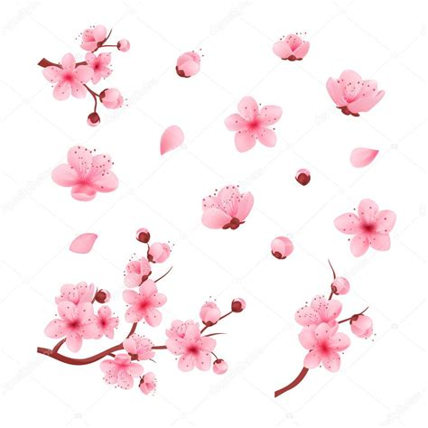 foto de Vetor ilustração sakura cereja ramo com flores