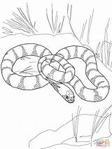 Snake Coloring Pages King California Snakes Realistic Garter Printable Drawing Tiger Mamba Python Water Cobra Flower Plains Getdrawings Kingsnake Supercoloring sketch template