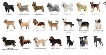 what cat breed am i what breed are you playbuzz