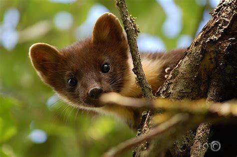 fotOblog.ninja - Meža cauna / Erta / Dzīvnieciņi ...