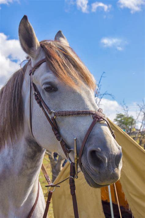 invites faithful horse travel