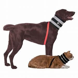 Video Pour Chien : collier bitenot accessoire pour chien et chat ~ Medecine-chirurgie-esthetiques.com Avis de Voitures