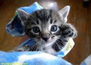 cutest cats in the world most cutest cats in the world lots of picters