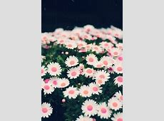 Floral Wallpaper For iphone – WeNeedFun