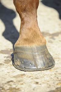 Cope With Cracked Hooves Your Horse Magazine