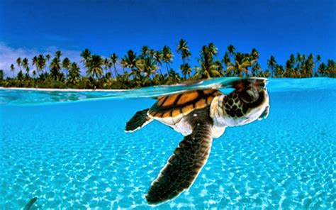Animals Wallpapers For Windows 7 - animals wallpapers for windows 7 top hd wallpapers