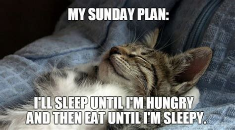 Funny Sunday Memes - a sunday well spent happy and inspirational sunday quotes
