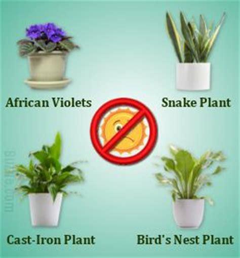desk plants that don t need sunlight indoor plants that don 39 t need sunlight