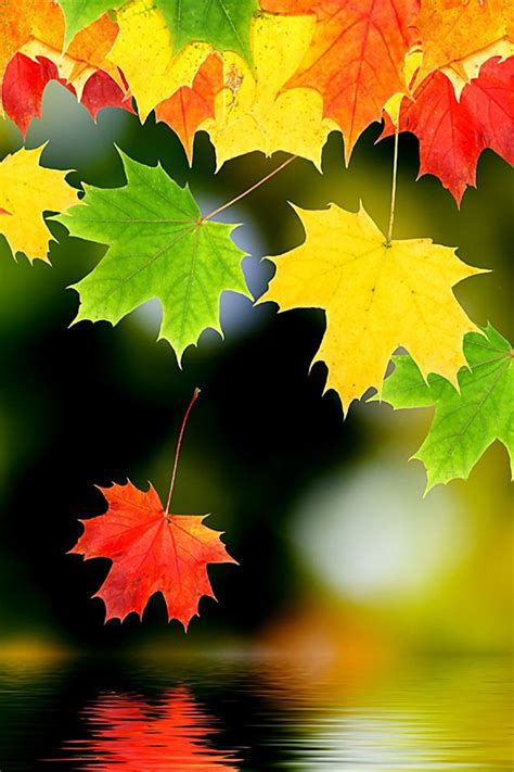 Beautiful Fall Leaves Iphone Wallpaper by Autumn Leaf Wallpaper Leafs Fall Autumn Iphone