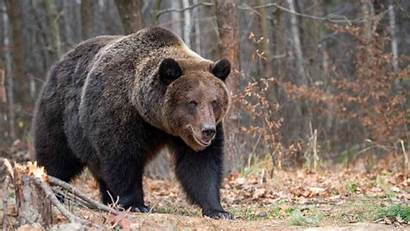 Grizzly Bear Woman Sighting Grizzlies Canada Month