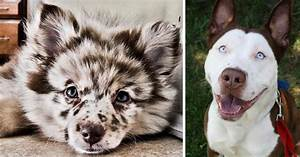 341 Crossbreed Dogs That Will Make You Fall In Love With ...