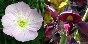 Botany Readings
