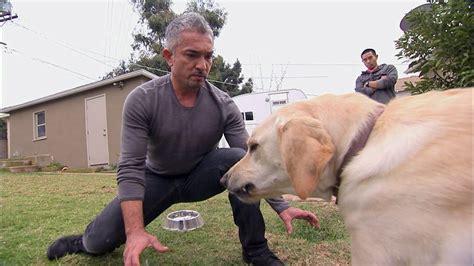 dog whisperer showdown  holly  youtube