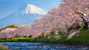 2048x1152 Sakura River japan 2048x1152 Resolution HD 4k