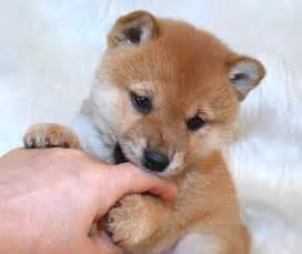 子犬:... 子犬 (ハニーわん