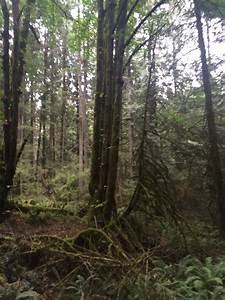 Rosemary U0026 39 S Sampler  Temperate Rain Forest
