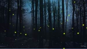 Fireflies Wallpapers - Wallpaper Cave
