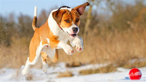 Top 10 Dog Backgrounds Hd Free Download