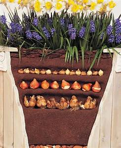 25  Best Planting Daffodil Bulbs Ideas On Pinterest