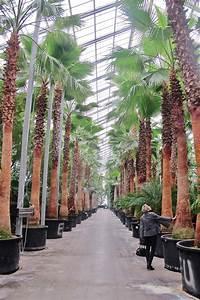 Online Pflanzen Kaufen : innenraumbegr nung objektbegr nung exotische xxl pflanzen kaufen ~ Watch28wear.com Haus und Dekorationen