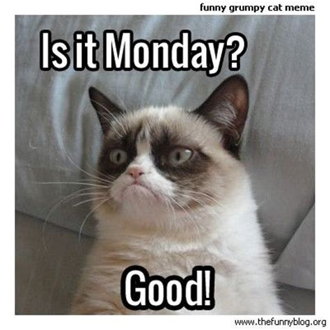 Talking Cat Meme - 98 best images about grumpy cat on pinterest grumpy kitty cat memes and grump cat