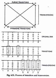 Gene Mutations of DNA Chain Types: Tautomerism and ...