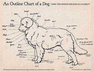 Here U0026 39 S An Awesome Dog Anatomy Diagram   With Images