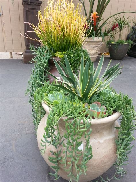 succulent gardens in pots 657 best agave and other succulants images on pinterest succulents garden succulents and cacti