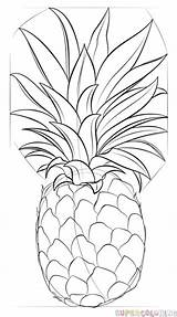 Pineapple Draw Drawing Step Supercoloring Line Medium Tutorial sketch template