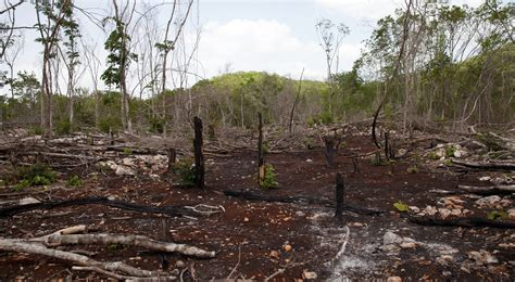 Deforestation, a plague to halt