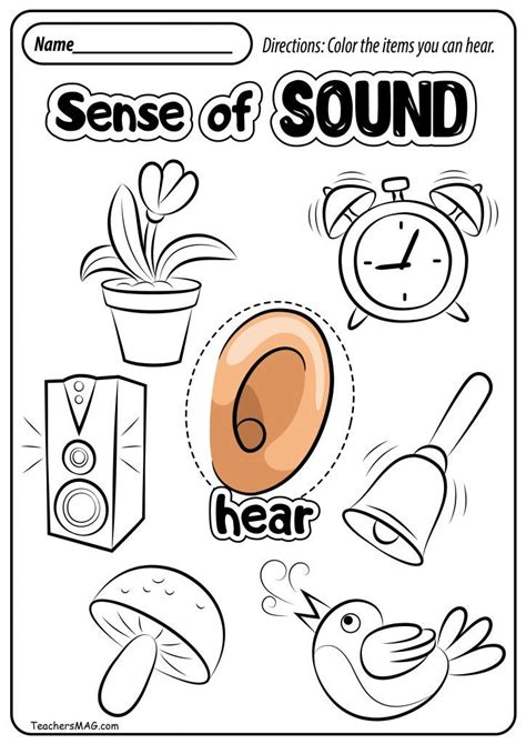 senses worksheets  images  senses