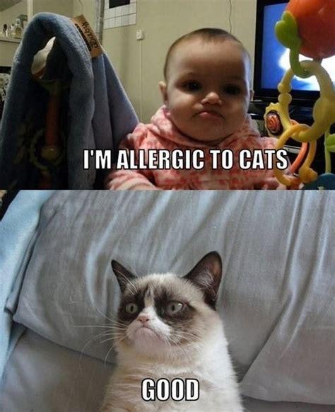 Grumpy Cat Memes Funny - ultimate grumpy cat compilation 17 pics