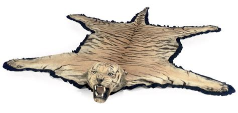 Skin Rug Taxidermy Cost by An Indian Taxidermy Tiger Skin Rug Mounted By Ingen