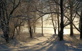 winter trees wallpaper 734743