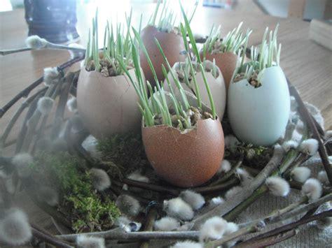 foto de Wild Roots Homestead: Spring is Here
