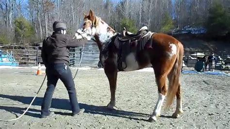 horse paint saddle tw retraining