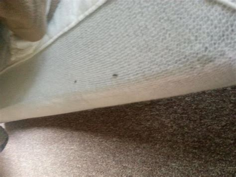 mouse droppings in bed mice droppings picture of inn motel wisconsin