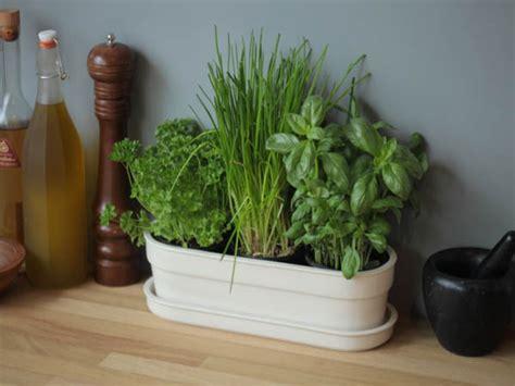 Window Sill Garden Planters by Window Sill Decoration Indoor Planters Herb Garden Or