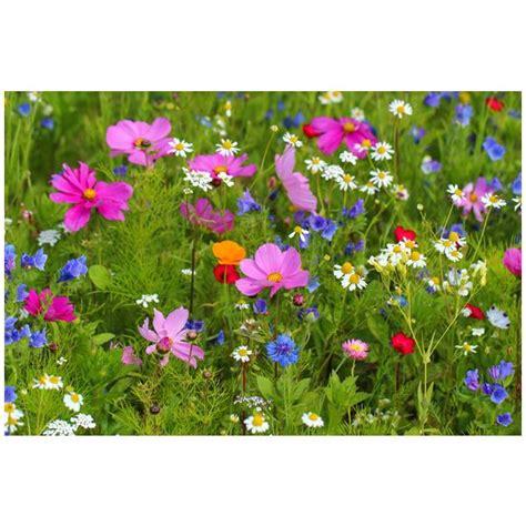 Wildblumen Im Garten by Wildblumen Im Garten Wildblumen Im Garten Stockfotos Und