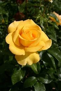 1663 Best Yellow   Golden Images On Pinterest