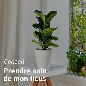 Plante D Intérieur Haute : plante verte botanic toutes nos plantes vertes ~ Premium-room.com Idées de Décoration