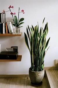 Savourez la beauté de la plante d intérieur dans notre galerie: