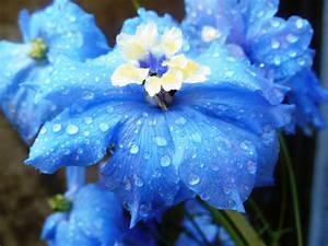 Summer Flower: Blue Flowers