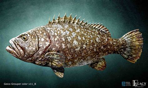 fish geico giant commercial fisherman grouper bodinsterba
