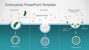 Endocytosis Process Powerpoint Diagram Template