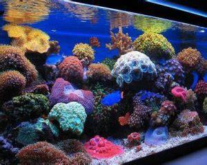 buy water heater 10 best led lighting for reef tanks 2018 reviews guide
