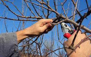 Comment Tailler Les Orchidées Pour Qu Elles Refleurissent : comment tailler un arbuste ~ Melissatoandfro.com Idées de Décoration
