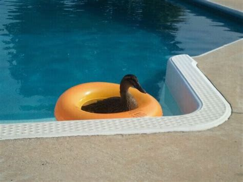 64 best images about animals pets in the pool on